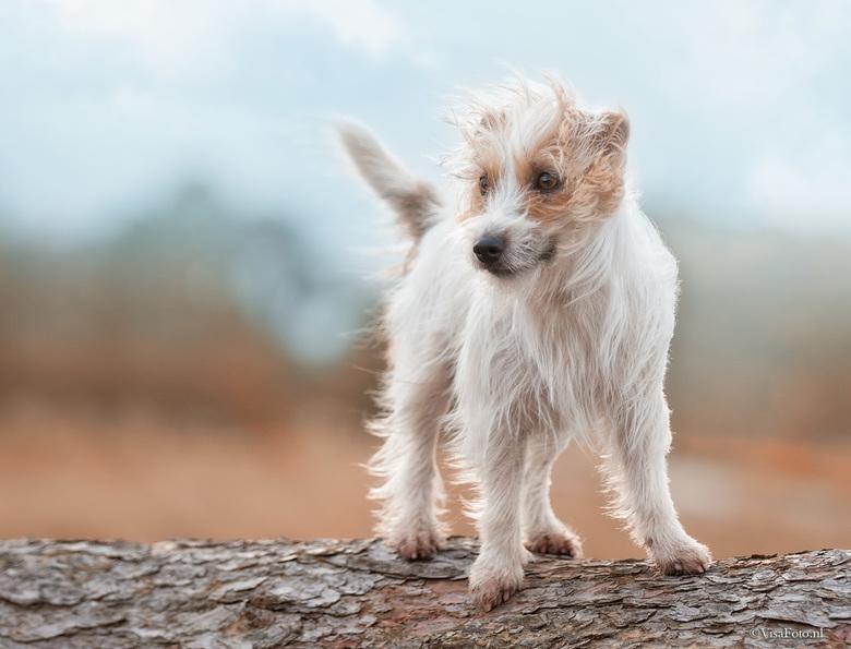 It was a bit windy - Eigenlijk had Lesley geen tijd voor mij omdat ze wist dat ik een balletje bij mij had maar ze werd heel even afgeleid en toen was