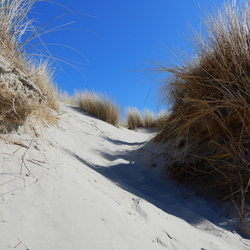 duinen in april