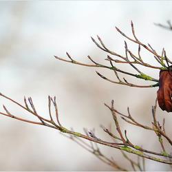 nog een eenzaam blad.................