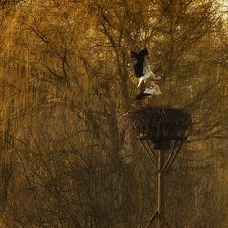 lente love nest