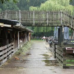 De geitenboerderij