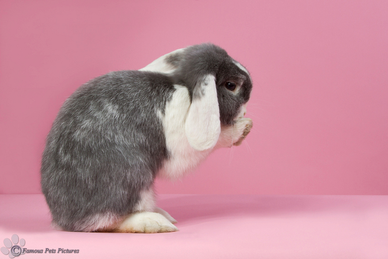 Bibi 'pretty in pink' - Vandaag een paar korte studiosessies gedaan met mijn konijnen. Op de foto Bibi, ze was een echt model vandaag, dus ik heb er n