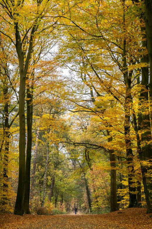Het gele bos - Een aantal Zoomers kennen dit stukje bos wel. Hier worden elk jaar de paddenstoelenzoomdagen gehouden. <br /> Maar of ze het door de k