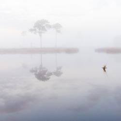 foggy Saturday morning