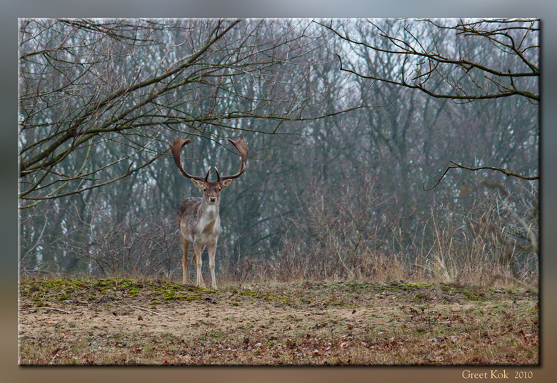 Uitkijken over zijn gebied - Nog een foto van afgelopen Donderdag.<br /> deze heb ik in Photoshop Elements iets bij gewerkt, o.a. de belichting op au