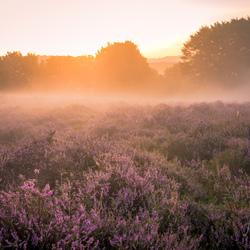 _sunrise on the heath