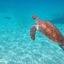 zee schilpad