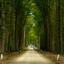 bosweg naar het LOO
