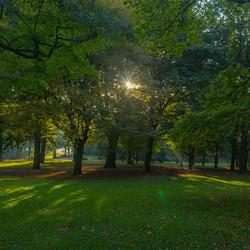 Ochtendzon in het park