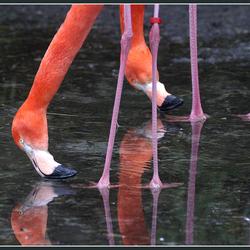 Between Legs!