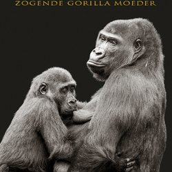 Zogende gorilla moeder