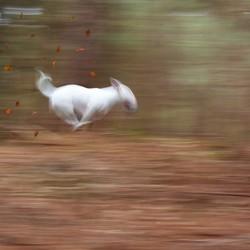 run PIP run