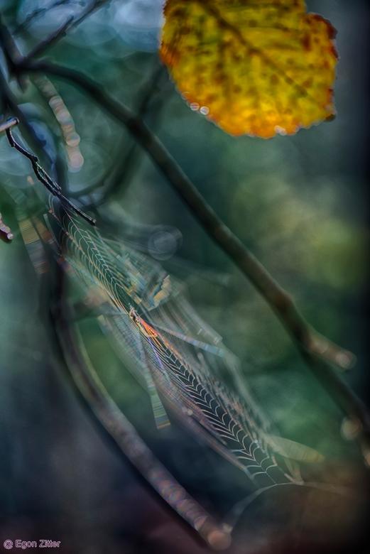 herfst liesbos 2019 - spinnewebje in de zon Breda Liesbos
