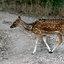 Mijn Tijger Safari  reis naar India