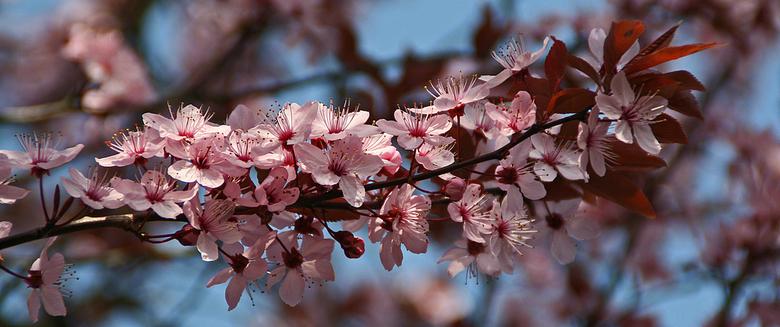 Oktobermaand de maand van Pink Ribbon