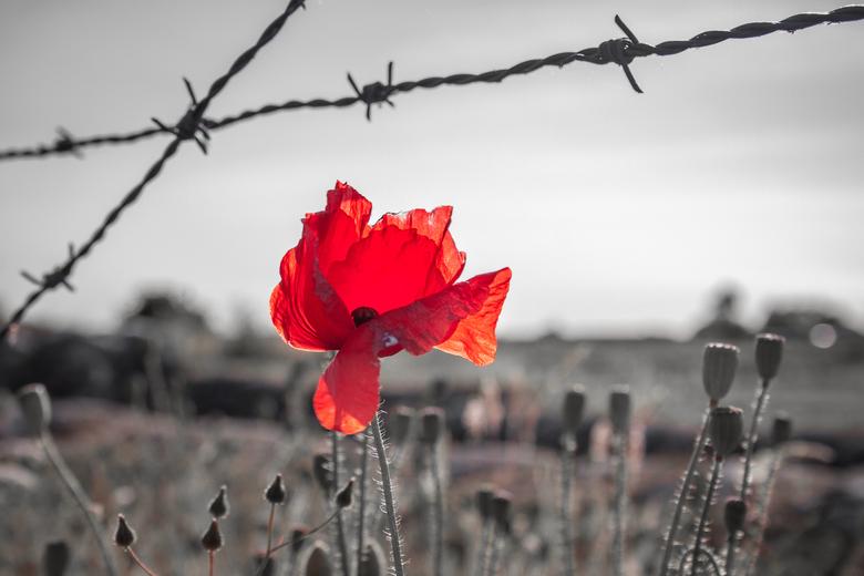 Of Roses and War - Of Roses and War.  Diksmuide, Belgie