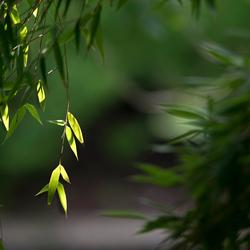 Bamboe II