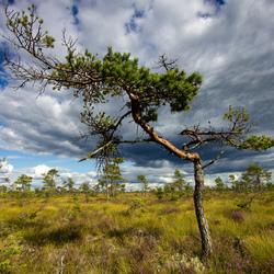 Store Mosse Nationaalpark
