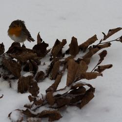 Winter has fallen