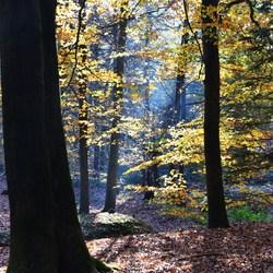 de kleur en het licht !! wat is de natuur toch mooi alles in evenwicht .