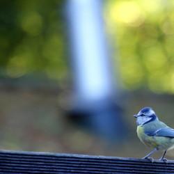 Dromerig vogeltje