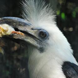Vogel met prooi