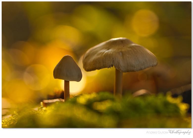 Autumn is rising - Terug naar de paddenstoelen. Nog eentje van het leersumse veld.<br /> Weer heel erg bedankt voor jullie leuke reacties. Fijne dag