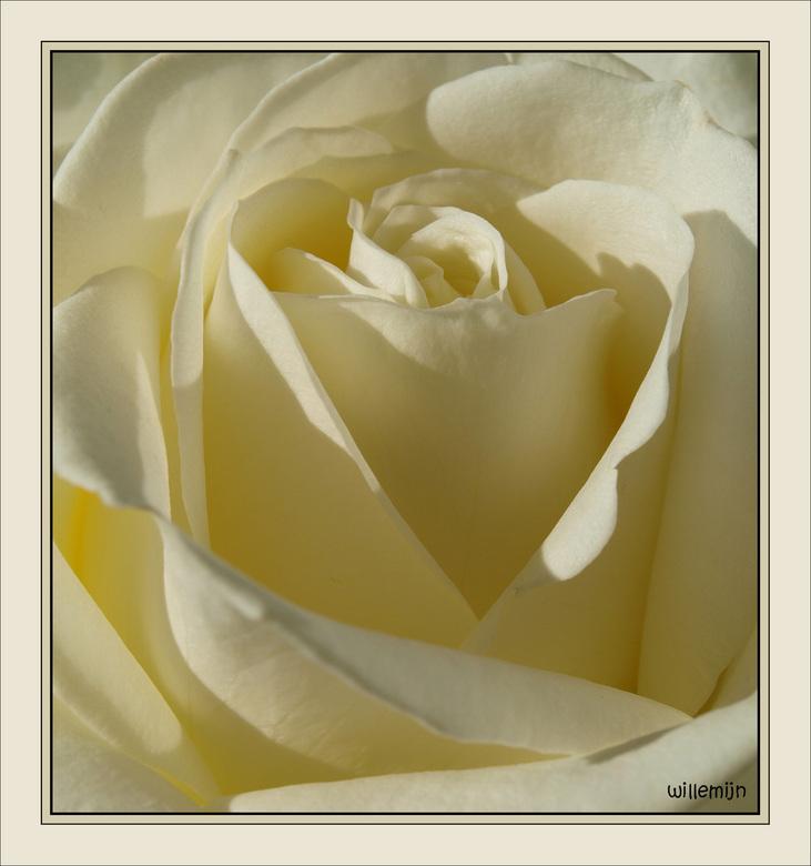 rosy -