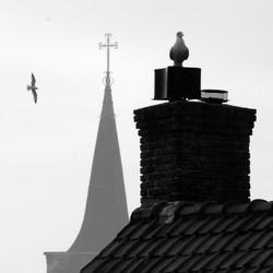 Meeuwen om de kerk