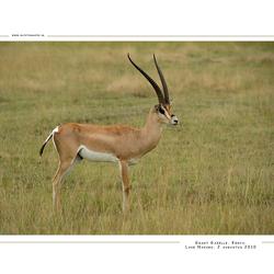 Grant Gazelle, Kenia
