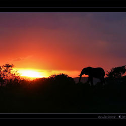 sundowner Mara