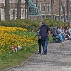 Voorjaar in Den Haag
