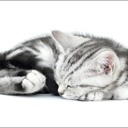 Sleepy Fred