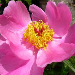 Test bloem