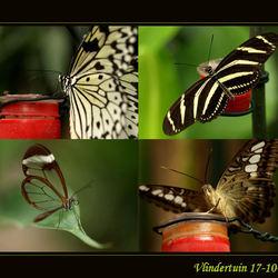 Collage van vlinders