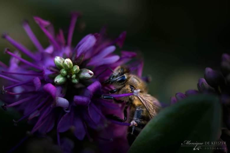 Little bee -