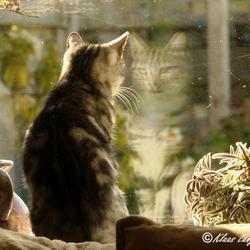 Roosje in de vensterbank