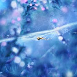 Hidden dream world