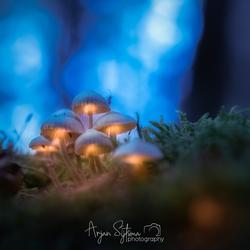 Licht in het Kabouterbos