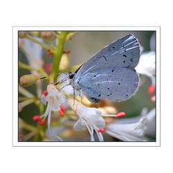 zag ik een bloesem terugkeren naar haar tak??.. ach nee het was een vlindertje.