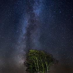 Melkweg en bomen