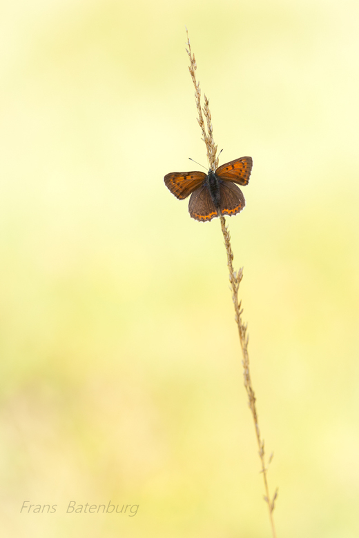 Weekendje vlinderen