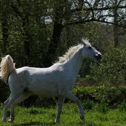 wilde witte