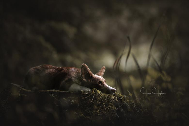 Woodland Whispers - Portret van Tobi in het Witte Veen.