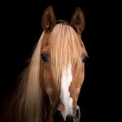Eerste keer paard voor camera en flitsers