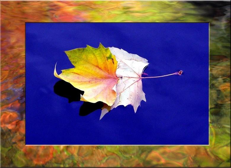 Project nr.2  Blue water - Foto gemaakt ook bij de haven, waarbij het ene blad er in gewaaid was van de kade, en een ander blad er bovenop viel. Ik he