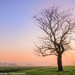 Ochtendgloren bij de boom
