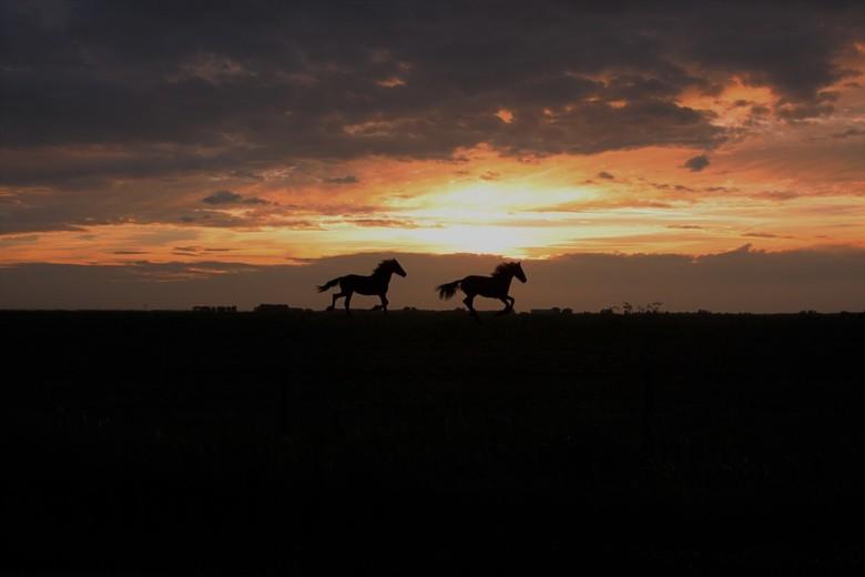 Zoutkamp - Twee galopperende paarden voor de zonsondergang in Zoutkamp.