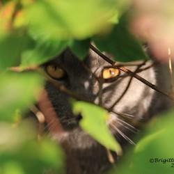 Onze kat op jacht in de tuin