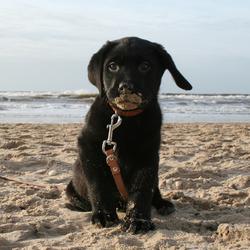 Spike aan het strand